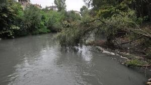Irmağın suyu siyaha büründü, balık ölümleri başladı