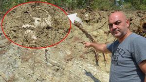 Bigadiçte yol kenarında çok sayıda kemik ortaya çıktı