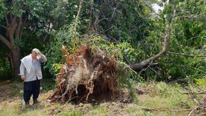 Osmaniyede fırtına; ağaç ve elektrik direkleri devrildi