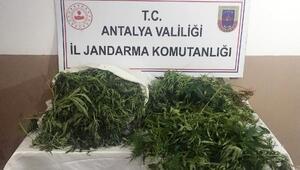 Serikte uyuşturucu operasyonu