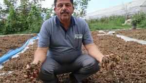 Fındık üretecisine aflatoksin uyarısı