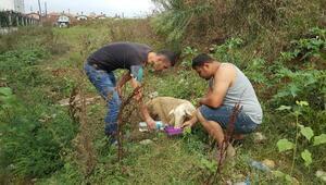 Kanalizasyon çukuruna düşen koyun kurtarıldı