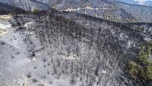 İzmirdeki büyük yangından geriye bu görüntü kaldı