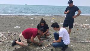 Hatayda 60 deniz kaplumbağası yavrusu deniz ile buluştu