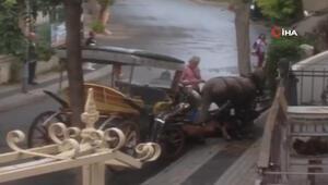 Büyükada'da at bitkin düştü, faytoncu zorla yerden kaldırmaya çalıştı
