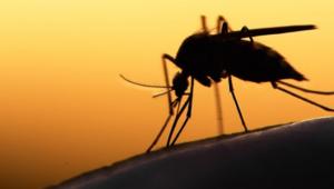 KKTCde ilk Batı Nil Virüsü teşhisi ona konmuştu, hayatını kaybetti