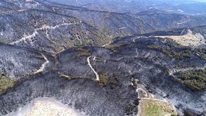 İzmirde özel ekip kuruldu, orman yangınının nedeni araştırılıyor