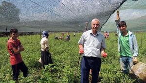 Bahçede sebzeciliği geliştirme projesi meyvelerini veriyor