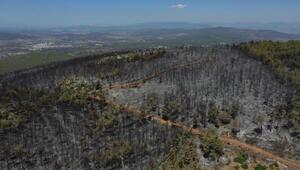 Bodrumda yanan ormanlık bölge havadan görüntülendi