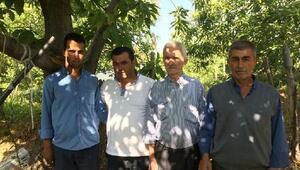 Kestane ağaçlarını kurutan kanser nedeniyle üretici sıkıntılı