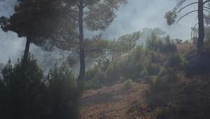 Serikte 10 hektar orman alanı zarar gördü