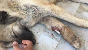 Mardinde HDPli belediyenin hayvanları açlığa terk ettiği iddiası