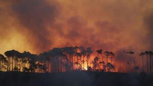 Dünyanın akciğerleri yanıyor Kontrol altına alınamıyor