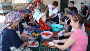 Kooperatif üyesi kadınlar, domates konservesiyle üretime başladı