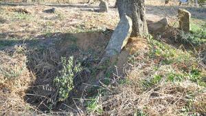 Şoke eden olay Mezarları kazıp aradılar