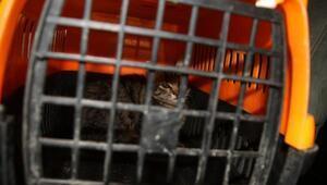 Apartman boşluğunda sıkışan hırçın kedi, kurtarıcılarını tırmaladı
