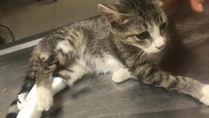 Otomobilin bacağını ezdiği kediye hayvanseverler sahip çıktı