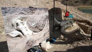 3 buçuk metre uzunluğunda 7 buçuk milyon yıllık Choerolophodon fosili bulundu