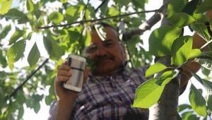 Cep telefonu ile konuşmak için ağaçlara ve çatılara çıkıyorlar