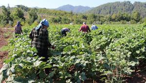 Yöneticiliği bırakıp çiftçi oldu Hobi olarak başladı ticarete çevirdi