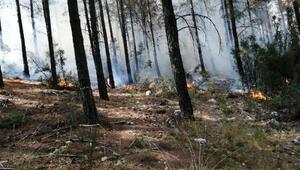 Kaşta orman yangını