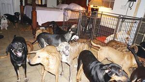 97 köpeğe evini açtı