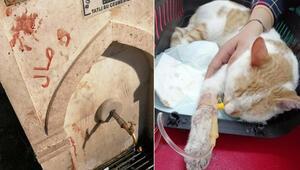 Kediye işkence yapıp kanıyla çeşme mermerine yazı yazmışlar