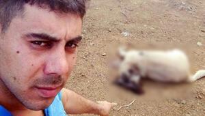Mersinde büyük vicdansızlık 9 aylık çoban köpeğini...
