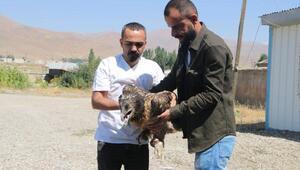 Nadir görülen sakallı akbaba Cilo Dağı eteklerinde yaralı bulundu