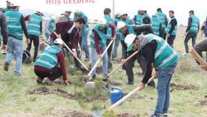 'Denetimli çevreciler' 1 milyon 150 bin ağaç dikti