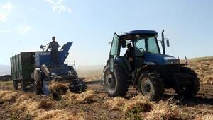 Türkiyenin kuru fasulye ihtiyacının yüzde 10'u Bitlis'ten