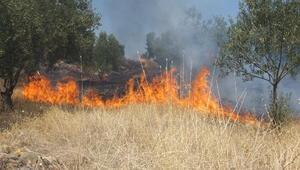 Burhaniyede ot yangını, zeytinliklere sıçradı