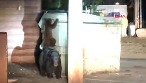 Konteynırda mahsur kalan yavru ayıyı polis kurtardı