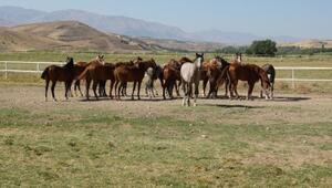 At sahiplerine ve yetiştiricilerine müjde TJK duyurdu...