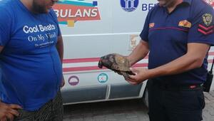 Didimde makilik alanda çıkan yangında iki kaplumbağadan biri kurtarıldı