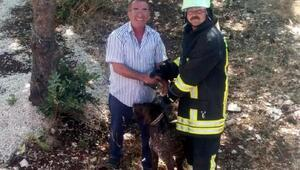 Çukura düşen köpeği itfaiye kurtardı