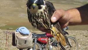 Yırtıcı kuş avlayanlar suçüstü yakalandı