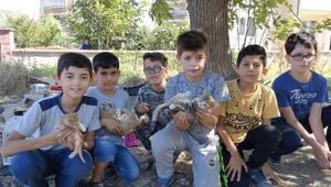 Çocuklar, ölen anne kedinin yavrularına sahip çıktı