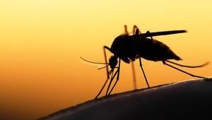 2 milyara sıtmayı bitiririz