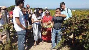 Bozcaadada üzüm turizmi başladı