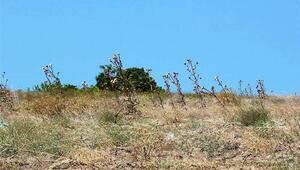 Kumkale Şehitliği'nin yeri tespit edildi