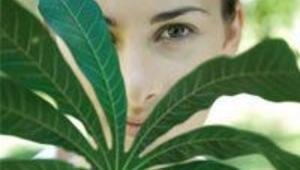 Şifalı bitki tozları nasıl zayıflatıyor