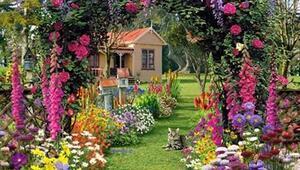 Bahçe ve Balkonlar için 10 Yaz Çiçeği
