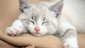 Kedinize Yedirmemeniz Gereken 11 Zararlı Yiyecek