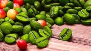 Yeşil Kahve Zayıflatıyor