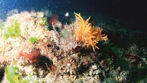 Marmara mercanları kurtuldu