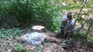 Kestiği ağacın dalı başına düşen işçi hayatını kaybetti