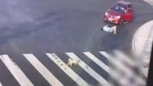Köpekten yayalara trafik dersi