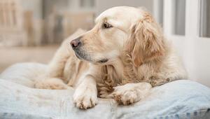 Köpeği hasta olana '14 gün işe gidemez' raporu