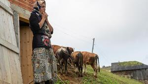 Almanya'da haber oldu: Türkiye'deki kuş dili, cep telefonları yüzünden yok olmak üzere